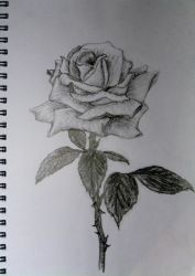 Rosa by Ruter