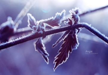 Between Autumn and Winter Lovers by Angie-AgnieszkaB