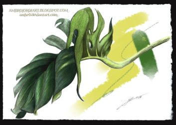 Monstera Deliciosa by AmBr0