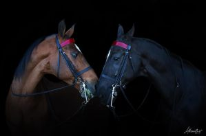 Photography:: A Tentative Friendship by SilverSummerSong
