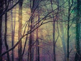 in every dream forest by Migrena