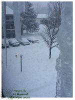 2010 15 02 Snow Pictures 02 by lilly-peacecraft