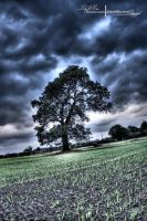 HDR Old Oak Tree. by ElementaryDearWatson
