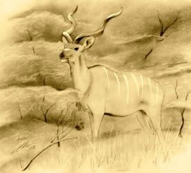 Kudu by wildpaintings