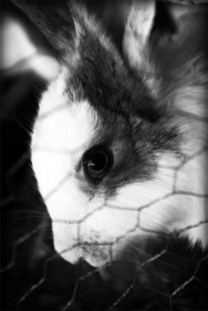 rabbit by CooPeRr