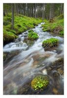 Forest Creek by AndreasResch