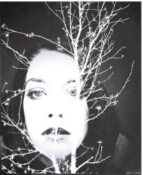 Branches by MarinaCoric