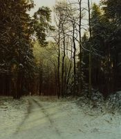 Wintry Forest at Dawn by MHandt