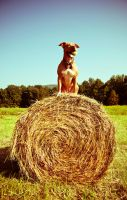 Queen of Bales by sarallyn