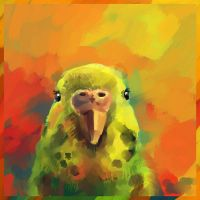 parrot by RedGraf