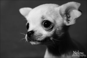 Little dog. by nelow-ow