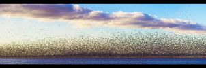 Migration of Millions by FramedByNature