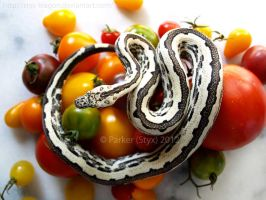 Elysion and Tomatoes by styx-leagon