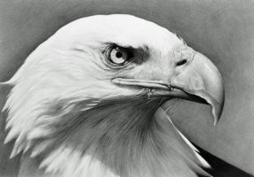 Bald Eagle by CubistPanther