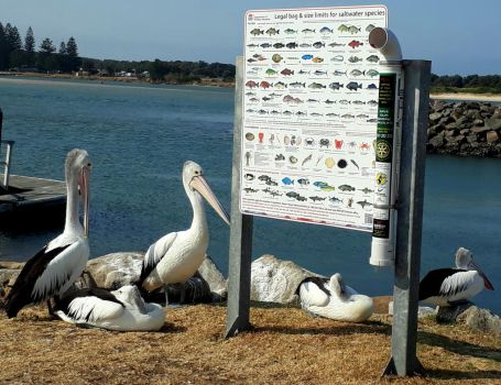Fish Porn for Pelicans by RivieraVisual