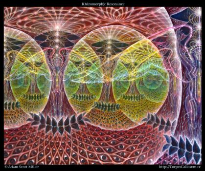 Rhizomorphic Resonance by Adam-Scott-Miller