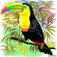 Toucan Amazon Rainforest  j'y BluedarkArt by Bluedarkat
