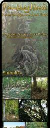Forest Backgrounds Zip Pack 1 by FantasyStock