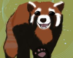 Red Panda by Re-dez