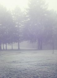 Misty Wood 4 by moonchild-lj-stock