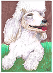 Animals - Poodle 250dpi by exclusivelysu