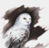 White owl by Egretink