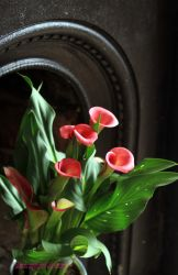 Calla shapes ...on Iron grate 1852 by GeaAusten