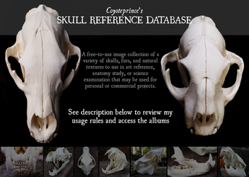 Skull Reference Database by Coyoteprinceart