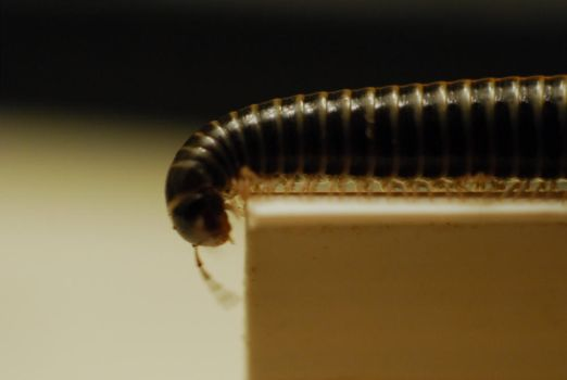 Millipede by sPARROW66
