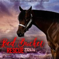 Red Bucket Rescue by Charmed-Studios