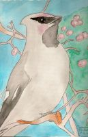 Waxwing by firefoxessmoon