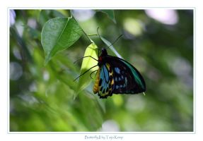 Butterfly II by ToXxIcRoSe