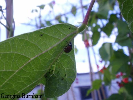 lady of the bugs by rose-marie-blossom