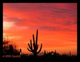Painted Sonoran Desert Sunset by RooCat