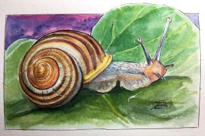 World Watercolor Month - Day 1 (Snail) by Harmony1965