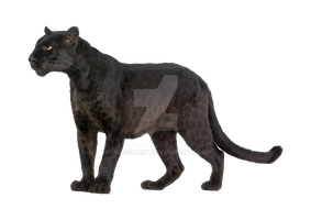 Black panther on a transparent background. by PRUSSIAART