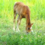 Child of a horse... by Roji-Hachi