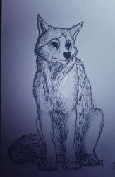 wolf by wex1234