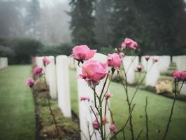 On the cemetery 5 by Inilein