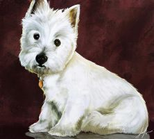 Highland Terrier by RedSaucers