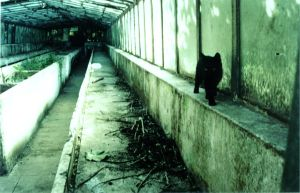 perspective black cat by lil0