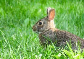 As The Wind Blows Through My Hare by CRG-Free