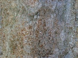 bark surface by Kwintzy