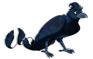 [SeldomSeenSpeciesSunday] Racket-Tailed Drongo by TheCynicalHound