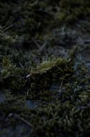 New life by lunatis