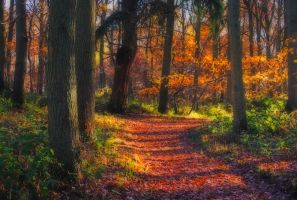 Autuminal Dream by Capturing-the-Light
