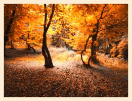 Forever autumn by scoris by Ro-nature