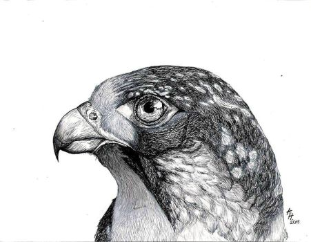 Falcon by Qyiet195