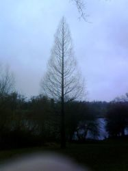 Mote Park 21 -Symmetrical tree by Only-truth
