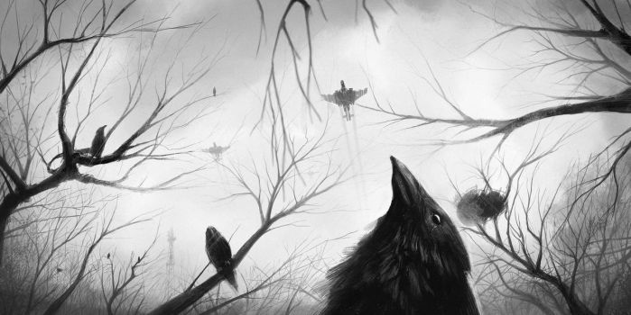 Ravens by timbayo